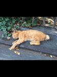 猫太郎さん(29)男性